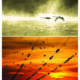 papier ryżowy do decoupage -Ptaki